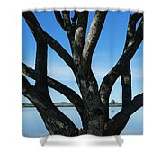 Beautiful Winters Day Shower Curtain