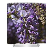 Beautiful Wisteria A Spring Delight Shower Curtain