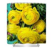 Beautiful Yellow Ranunculus Shower Curtain