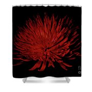 Beauty 2 Shower Curtain