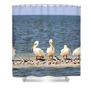 Beauty - 8831-001 Shower Curtain