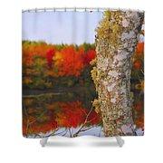 Beauty And The Birch - Nova Scotia Shower Curtain