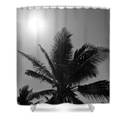 Beauty And The Palms In  Dominican Republic  Shower Curtain