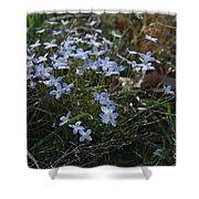 Beauty Blue Flowers Shower Curtain