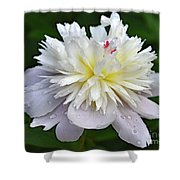 Beauty Can't Be Dampened - Festiva Maxima Double Peony Shower Curtain