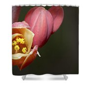 Beauty Emerges Shower Curtain