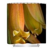 Beauty Evolves Into Harmony Shower Curtain