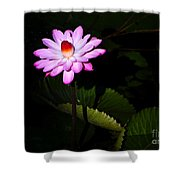 Beauty From The Shadows Shower Curtain