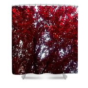Beauty-full Red  Shower Curtain