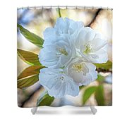 Beauty Has No Name... Shower Curtain