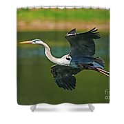 Beauty In Flight Shower Curtain