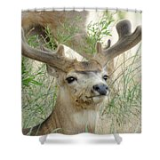 Beauty In Summer Shower Curtain