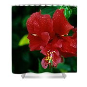 Beauty In The Jungle Shower Curtain