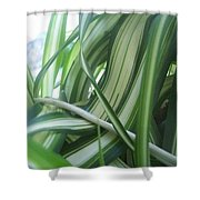 Beauty Is Within Lines Shower Curtain
