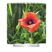 Beauty Of A Poppy  Shower Curtain