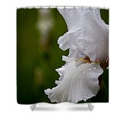 Beauty Of An Iris Shower Curtain