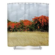 Beauty Of Bougainvillea Shower Curtain