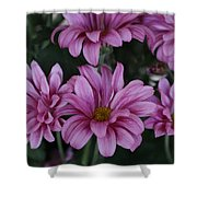 Beauty Of Pink Shower Curtain