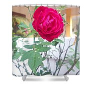 Beauty Of  Red Rose  Shower Curtain