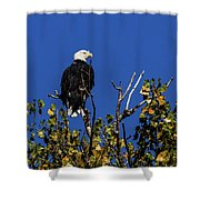 Beauty Of The Bald Eagle Shower Curtain