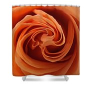 Beauty Of The Rose II Shower Curtain