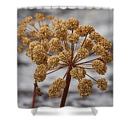 Beauty Of The Seeds Shower Curtain