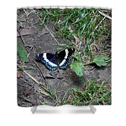 Beauty On The Dusty Path Shower Curtain