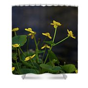 Beauty On The Waters Edge Shower Curtain