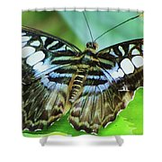 Beauty On The Wing Shower Curtain