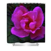 Beauty Unfurls Shower Curtain