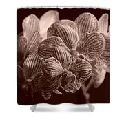 Beauty Up Close 4 Sepia Shower Curtain