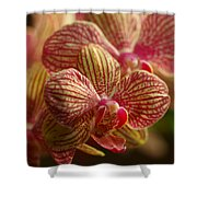 Beauty Up Close 6 Shower Curtain