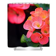 Beauty And Thorns Shower Curtain