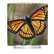 Beauty With Wings Shower Curtain