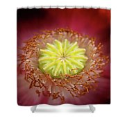 Beauty Within  Shower Curtain