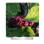 Beautyberry 2 Shower Curtain