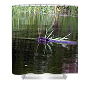Beaver Carrying A Reed Shower Curtain