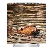 Beaver Feeding Shower Curtain