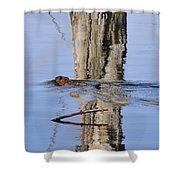 Beaver In Motion Shower Curtain
