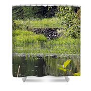 Beaver Pond Scene Shower Curtain
