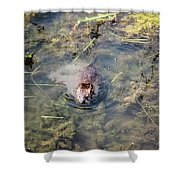 Beaver Spotted The Great Beaver Escape 01 Shower Curtain