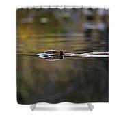 Beaver Swimming  Late Evening Shower Curtain