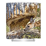 Beaver Wannabe Shower Curtain