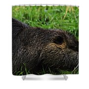 Beaver Whiskers Shower Curtain
