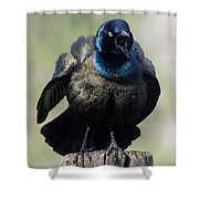 Because I Said So Shower Curtain