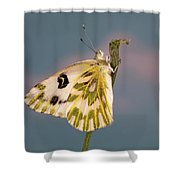 Becker's White Butterfly Shower Curtain