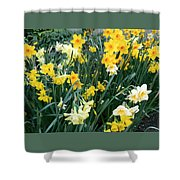 Bed Of Daffodils Shower Curtain