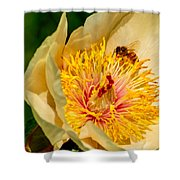 Bee And A Pale Yellow Early Glow Peony Shower Curtain