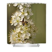 Bee And Blossoms Shower Curtain
