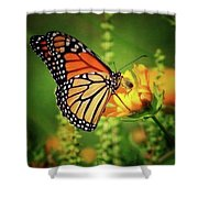 Bee And Butterfly Shower Curtain